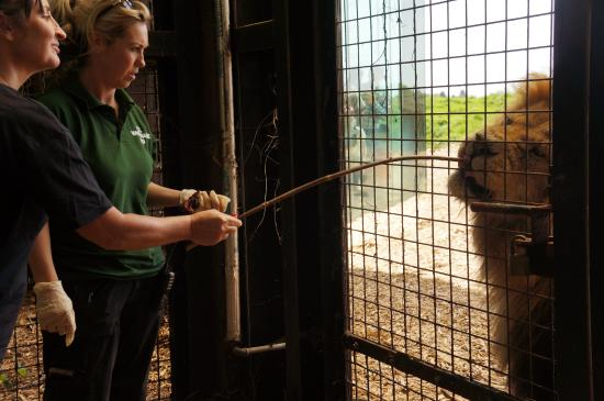 whipsnade zoo keeper for a day reviews